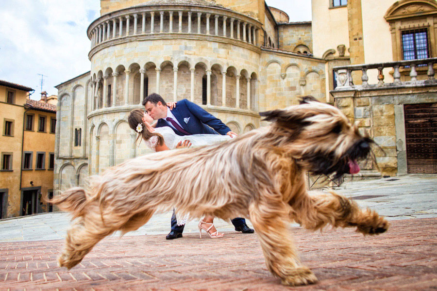 11 Adorable Pictures Of Animals At Weddings
